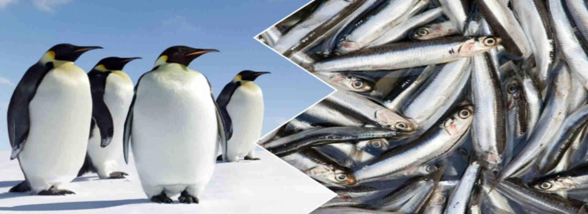 """""""Pinguini"""" e """"Sardine"""": la politica fatta dagli """"animali"""""""